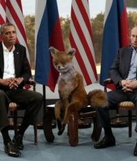 Новые санкции против России: Microsoft, Apple и HP не будут сотрудничать с российскими компаниями